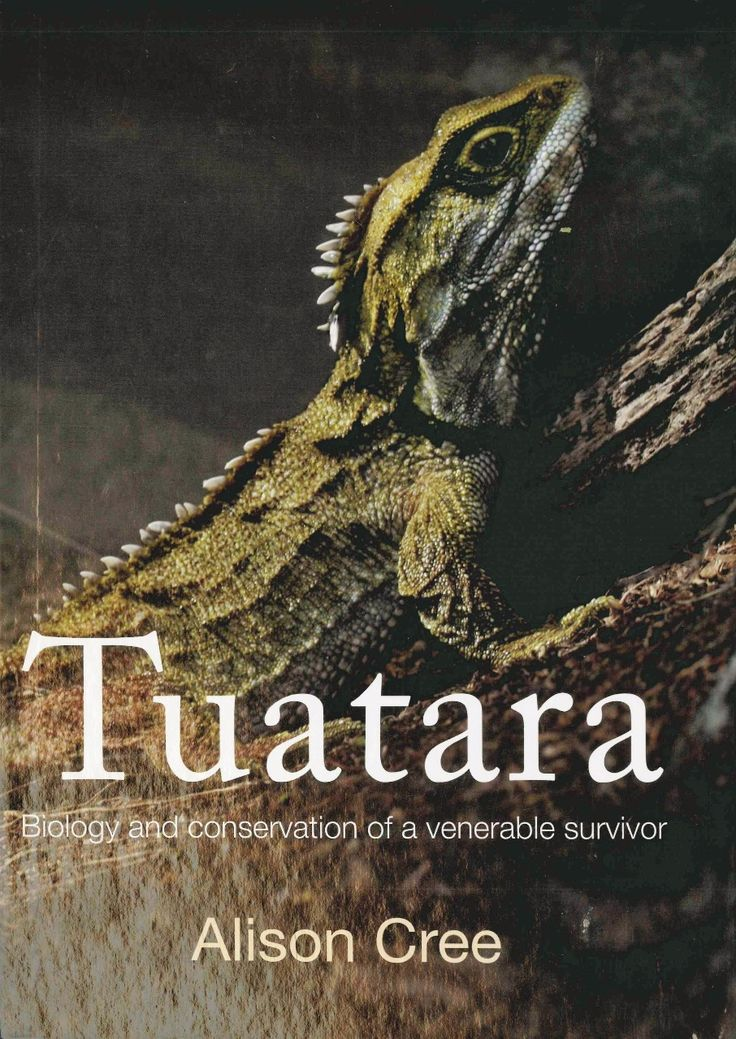 Pick up virtually any textbook on vertebrate evolution and you will find mention of the curious reptile known as tuatara (Sphenodon). The special evolutionary status of tuatara as the last of the rhynchocephalians - one of the four orders of living reptiles - is unquestioned.  Check this out on our website! www.nationwidebooks.co.nz