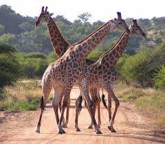 KENYA ADVENTURE TRAVEL: 3 DAYS MASAI MARA CAMPING SAFARI