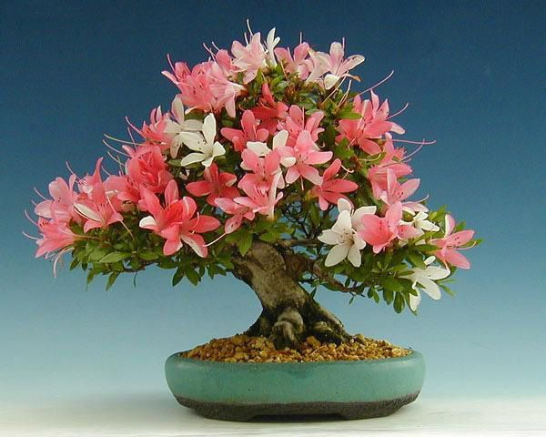 30 Awe-Inspiring Outdoor Bonsai Plants  going to try