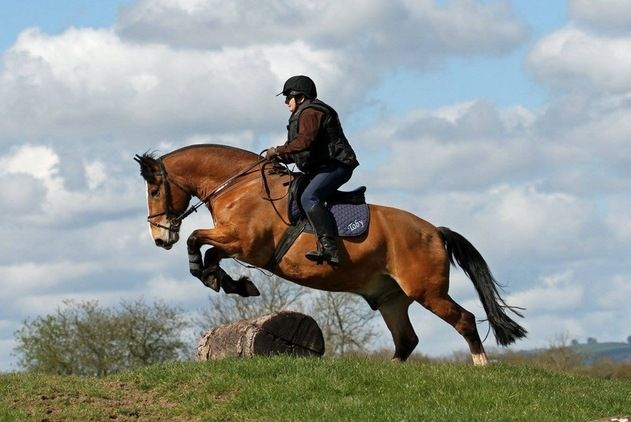 Super safe cob for sale in Somerset, South West. Search and browse horse for sale in Somerset, South West, at the UK.