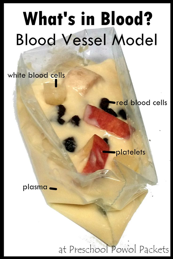 What's Inside Your Blood - An Edible Model! Perfect for preschool, kindergarten, and elementary school!