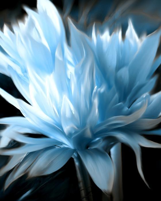 .: Blue Silk, Baby Blue, Susa Dosa, Blue Flowers, Art Prints, Soft Blue, Colors Blue, Blue Photographers, Blue Fine