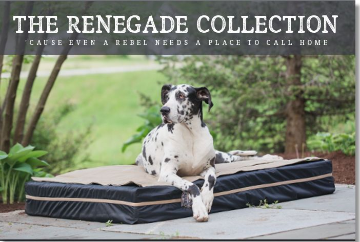 Big dog beds designed exclusively for big dogs like Great Danes, Wolfhounds, Great Pyrenees, & Mastiffs. Featuring innovation & cool styles for any big dog!