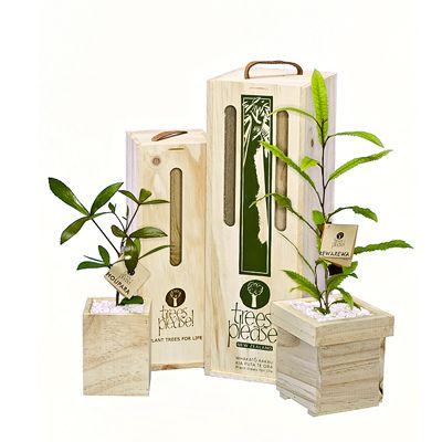 Sapling trees beautifully boxed and delivered within NZ.
