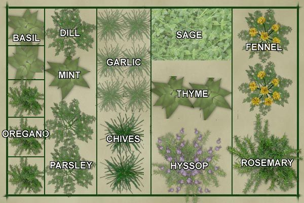 Vegetable garden layout template culinary herb garden for Vegetable layout