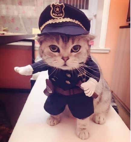 Cheap suit clothes, Buy Quality clothes rail directly from China clothes Suppliers: New 2016 whimsy!Free shipping so funny  Pet cat dog Dress uniform suit clothes + hat become the police