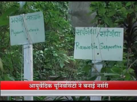 The spiritual nursery in Jamnagar by Gujarat Ayurvedic University -- Janoduniya.tv