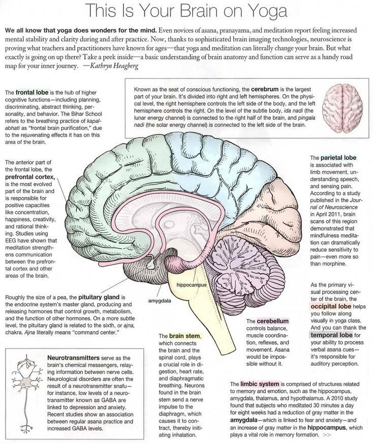 Meditation and Neuroplasticity, Self Directed Neuroplasticity, New Default Mode