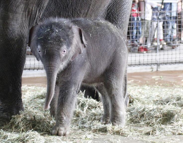 Trend Elefantenbaby im Berliner Zoo Berlin Ausflug