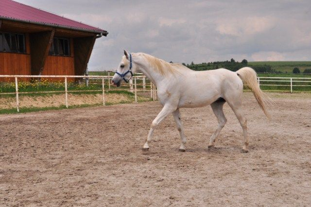To mój koń
