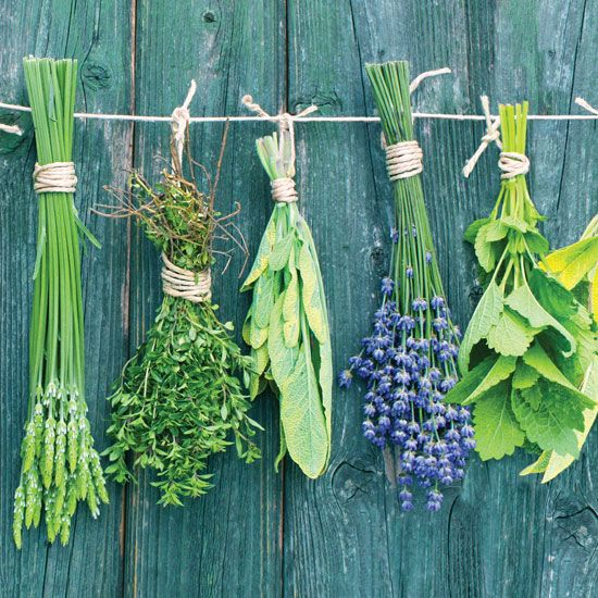 How to Preserve Fresh Herbs - Food and Recipes - Mother Earth Living