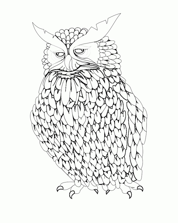 871 best images about owl colouring on pinterest
