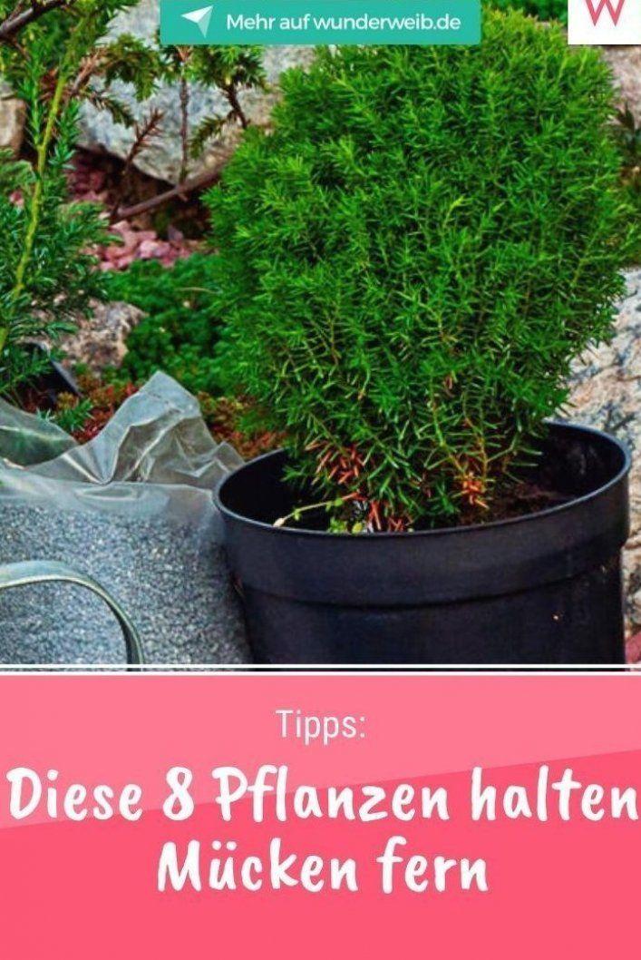 Diese Acht Pflanzen Gegen M Cken Vertreiben Die Fiesen Insekten Und Sorgen Daf R Dass Du Dich Im Sommer Nicht Ununterb In 2020 Plants Outdoor Gardens Gardening Tips