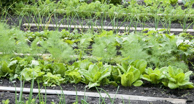 3+1 λαχανικά για το χειμώνα
