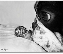 Petit Escargot...     Petit Chien