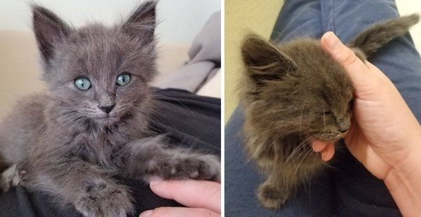 Kitten Won T Leave Woman S Lap After He Was Found Alone Under A Car Kittens Kitten Love Cats And Kittens