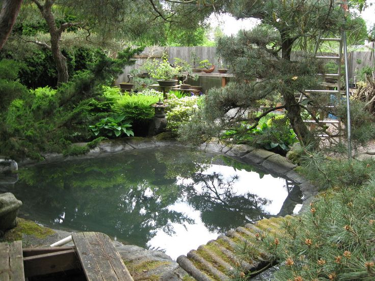 23 best images about pond design on pinterest one fish for Best pond design