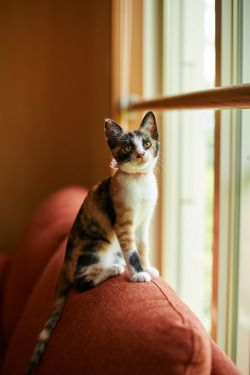 1000 Images About Cats Behind Fences Doors Windows On