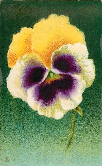 deep yellow, white & purple pansy, single stem pointing down, one small leaf below flower, green background