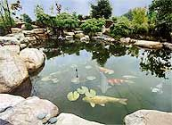 an example of a pond that can be built using our kits #watergarden #pondkits