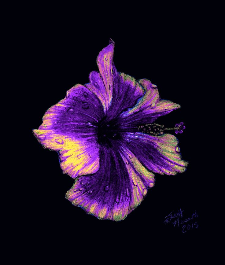 purple hibiscus - relationship essay In its focus on suffocating religion and patriarchy purple hibiscus reminded me of the novels of miriam  relationship between a fifteen-year-old and her.