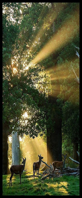 Deer ♦️ Forest Lights #by Chaitanya Deshpande Photography #tree sun sunlight sunrise sunset landscape nature silouette beautiful