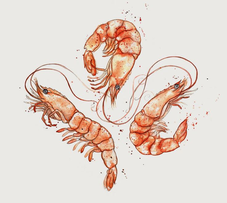 7 best drawings/illustrations images on Pinterest   Water colors ...