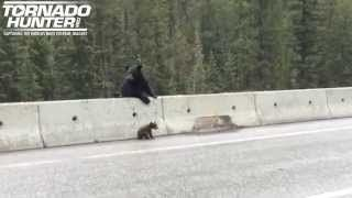 A bear, a cub and a highway rescue.