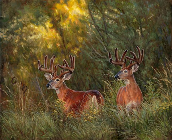 Original Oil Painting Whitetail Deer Ryan Kirby Quot Autumn