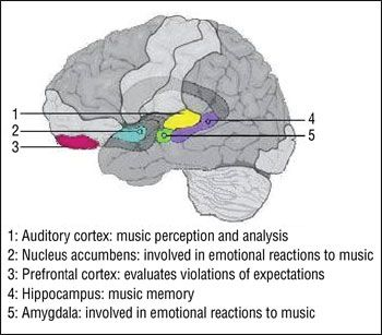The mind music and behavior