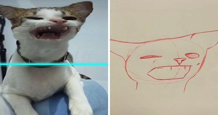 10 Potret Kucing Yang Bikin Tertawa Ngakak Korban Scan Filter Di Tik Tok Menggambar Kucing Kucing Anjing Hewan