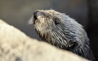 Webcams and other activities from the Monterey Bay AquariumHappy Hour, Monterey Aquariums, Soo Fun, Aquariums Monterey Ca, Lil Guys, Monterey Bays, Bays Aquariums, Sea Otters, Fields Trips