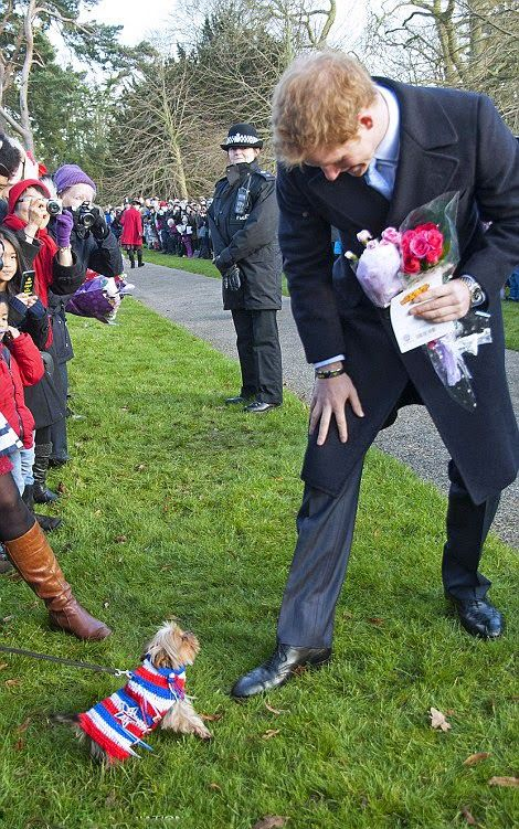 Prince Harry took a shining to a little terrier named Pixie, who was dressed in a patriotic-coloured knitted coat