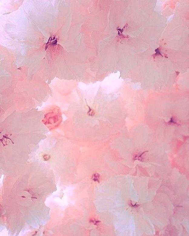 Light pink aesthetic light pink aesthetic header lorgeland com Flower aesthetic Pink aesthetic Pastel aesthetic