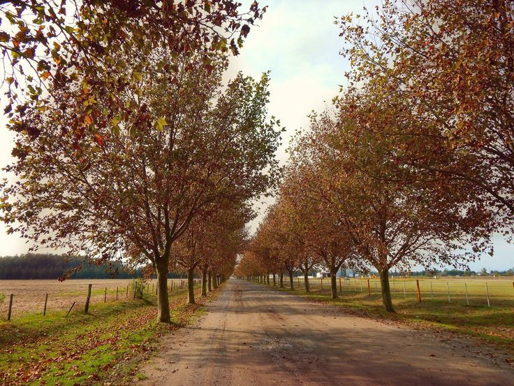 Árboles alineados, Malabrigo, Santa Fé, Argentina