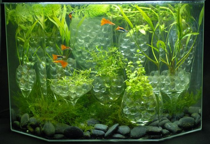 An aquarium i created with goblets clear marbles black for Fish tank marbles