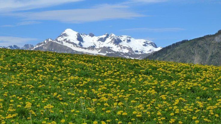 4 paisajes primaverales del mundo