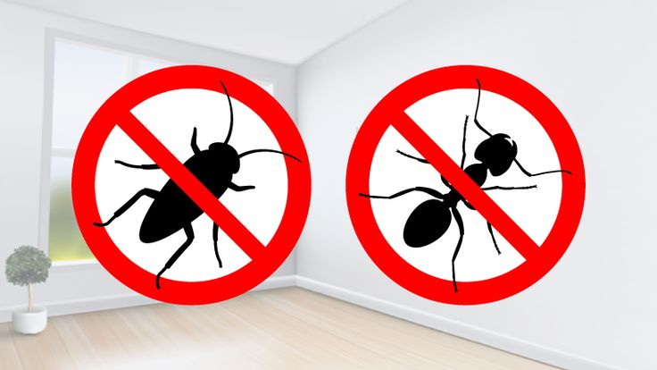 Truques caseiros para acabar com formigas e baratas