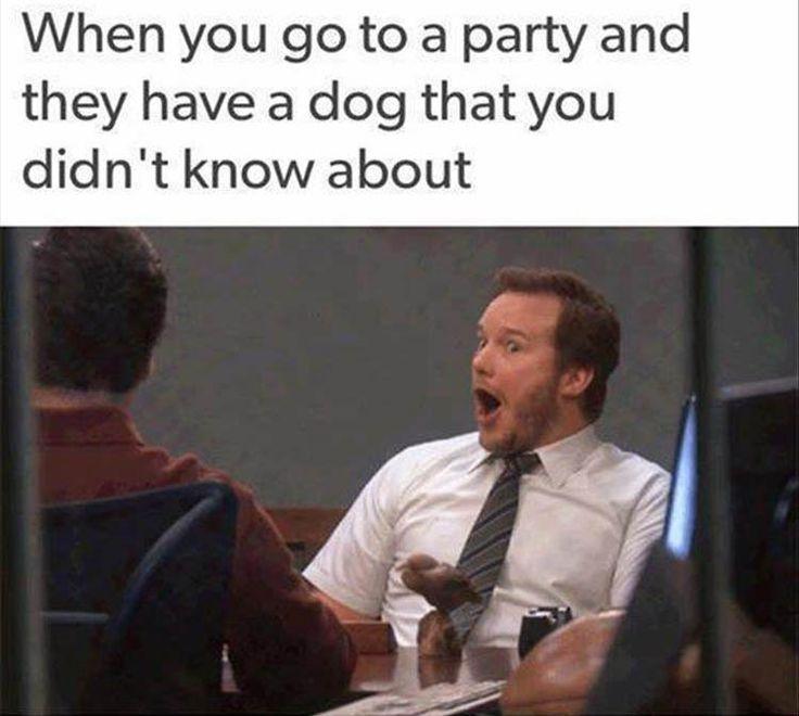 404e551265bbf18f174b22a4c2e04e06 dog parties party jokes best 25 boyfriend memes ideas on pinterest funny boyfriend,I Know U Looking Funny Memes