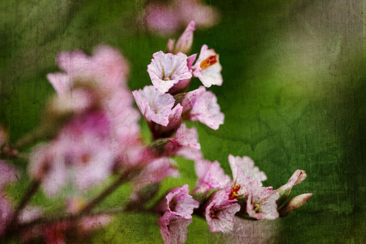 Blooming by Marina Pierre on 500px