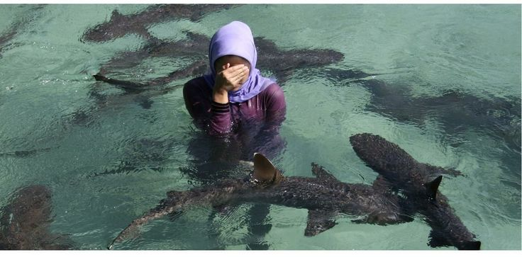 One of the unique places to visit around the islands is the shark pool, located at Menjangan Besar island in KARIMUNJAWA. They have two pools here; one is the home for the reef sharks and the other houses the black tip sharks. There's also another small shark pool where we could swim with the sharks, turtles and starfish.