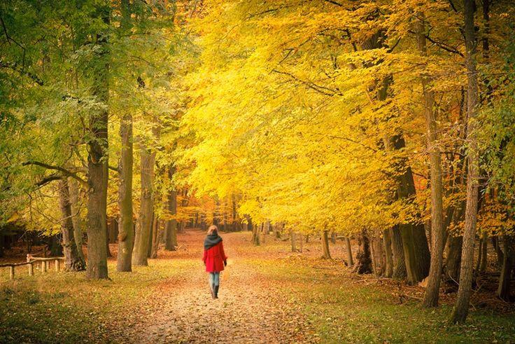 Yürümek Yaratıcılığı Nasıl Tetikliyor?Yürüyüşe çıktığımızda kalbimiz daha hızlı atıyor, sadece kaslara değil beyin de dahil olmak üzere tüm organlara kan ve oksijen ulaştırıyor. Sayısız deney, insanların egzersiz sırasındaki veya sonrasındaki hafıza ve dikkat testlerinde daha iyi sonuçlar aldığını gösterdi. Düzenli olarak yürümek beyin hücreleri arasında yeni bağlantılar geliştiriyor, yaşlanmayla gelen olağan beyin dokusu daralmasını geciktiriyor, hipokampüsün (hafıza ve yön bulmada önemli…