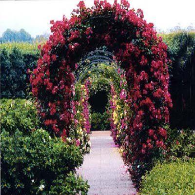Best trellis for climbing rose 2m garden steel rose arch - Garden arch climbing plants ...