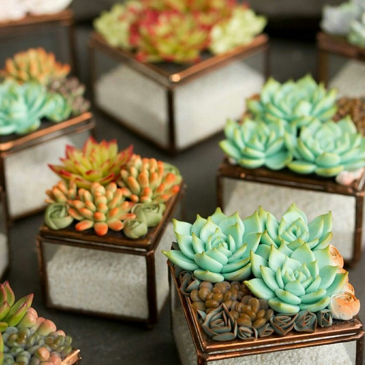 New glas succulents box) from @eteniren #succulents #ringbox #jewelrybox #plants #succulentjewelry #succulentbox