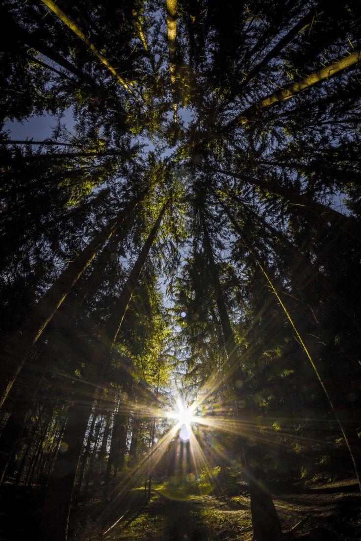 "Fotografie ""Slunce v lese"" | Megapixel.cz"