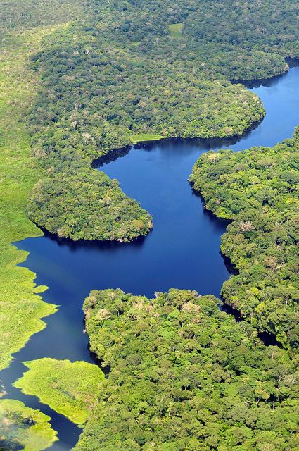 Aerial view of the Amazon Rainforest, near Manaus, the capital of the  Brazilian state of Amazonas