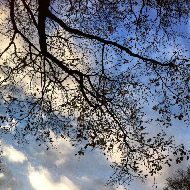 Blue Skies at Southampton Common