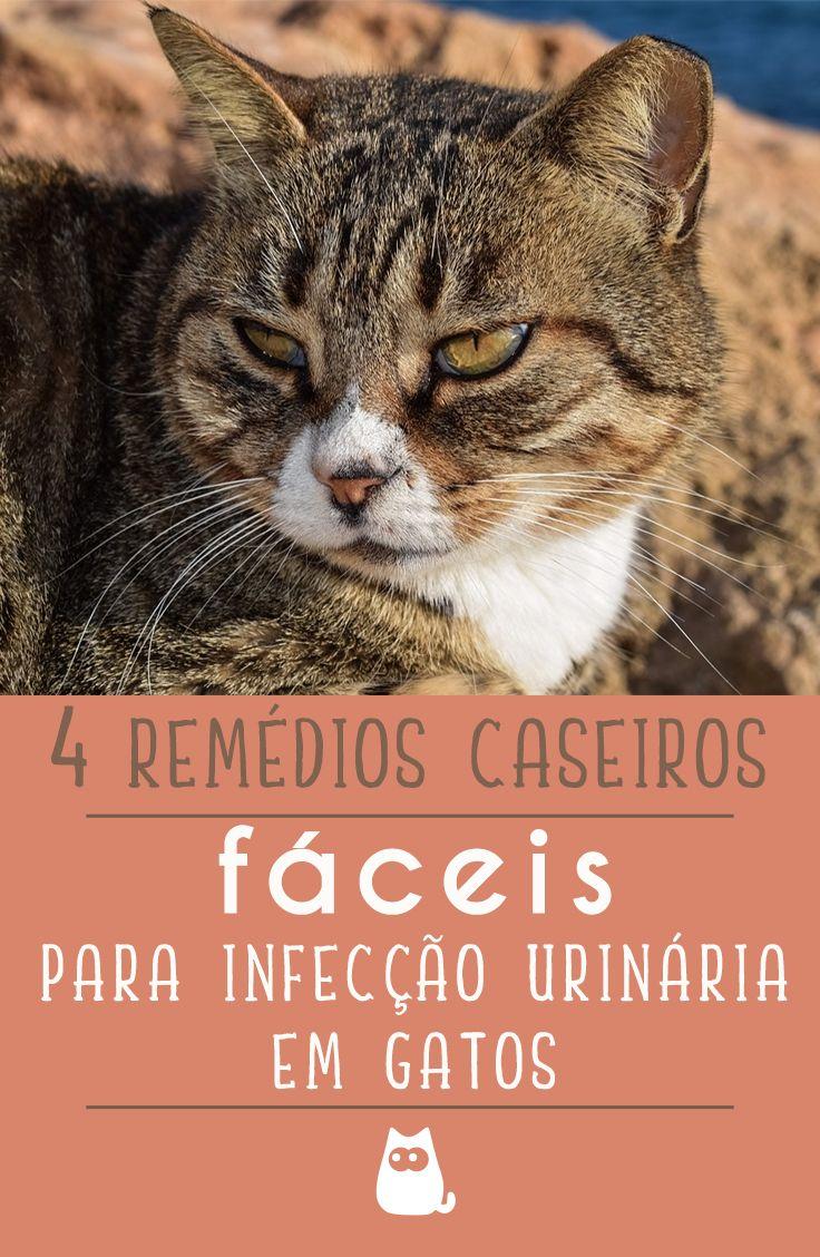 remedio para infecção urinaria de cachorro