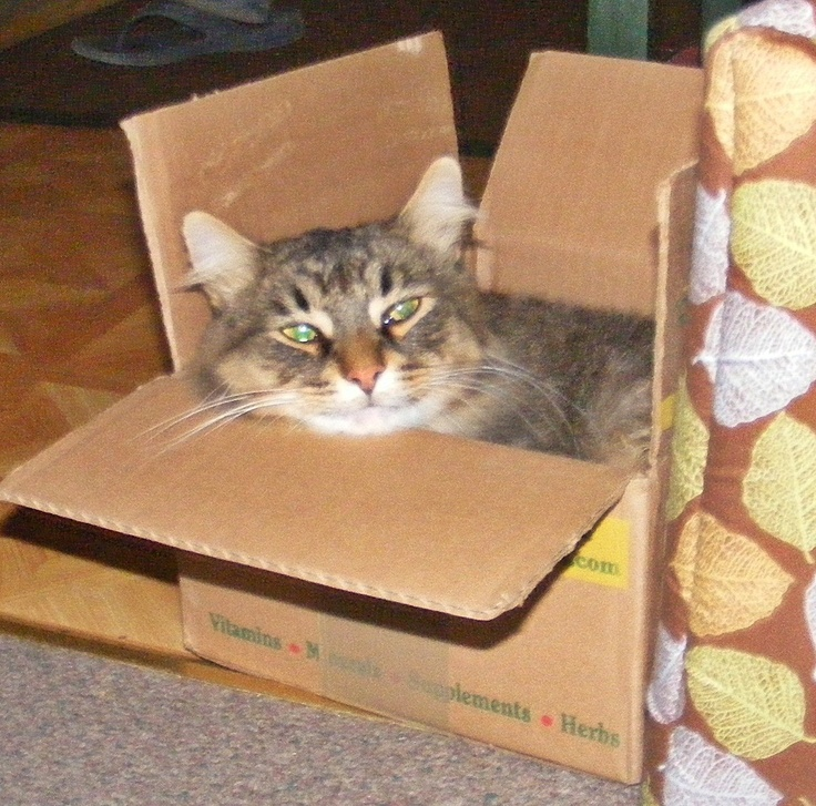 111 best Cats in Boxes. Seriously! images on Pinterest | Funny cats Bags and Basket & 111 best Cats in Boxes. Seriously! images on Pinterest | Funny ... Aboutintivar.Com