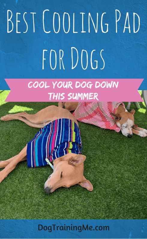 We recommend the best cooling pad for dogs for the summer heat. Does your dog need one, are they worth the money, and how do they work? We give you some buying tips to help you choose the right dog cooling pad or mat to keep your dog cool. Click through now for our top picks.